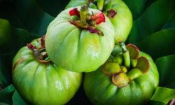 Does Garcinia Cambogia Extract Work for Weight Loss?